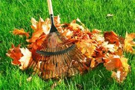 cutting edge lawn care offers leaf removal during the fall season.